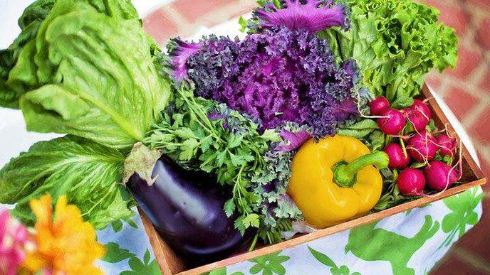 Effects of Antioxidant Rich Indo-Mediterranean Foods on Pre-Heart Failure