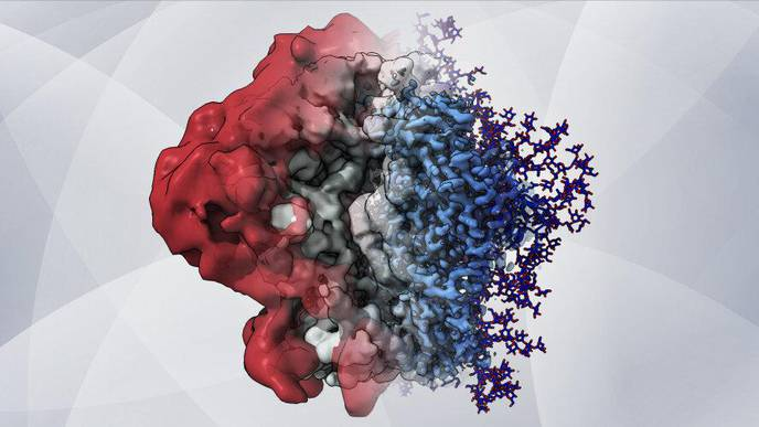 New Imaging Method Reveals HIV's Sugary Shield in Unprecedented Detail