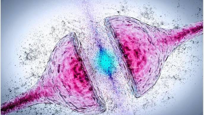 Gut Bacteria Affecting Parkinson's Treatment