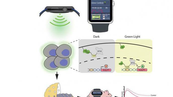 Controlling Insulin Production with a Smartwatch